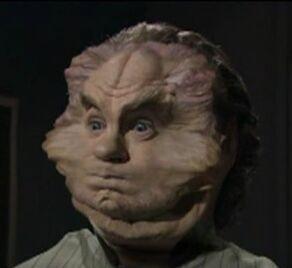 Phlox face