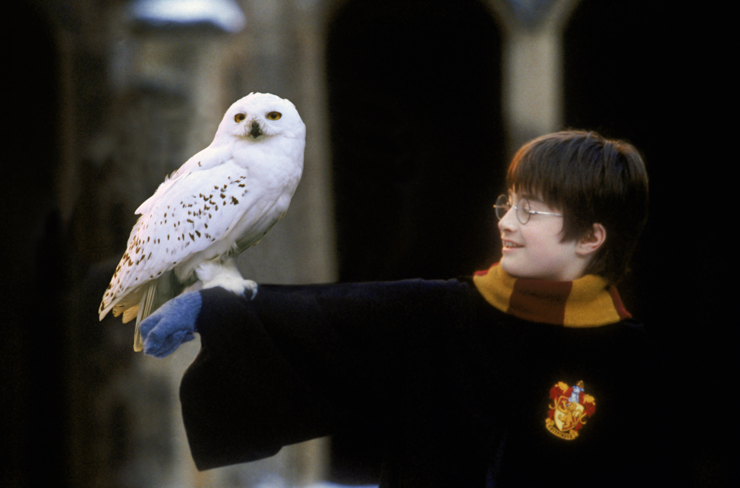 Owl harry potter wiki - Chouette hedwige ...