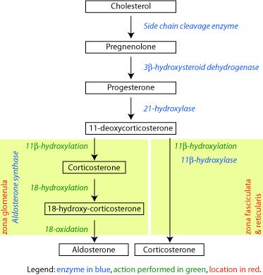 steroid estratetraenol