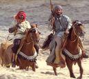 Bedouins' horses