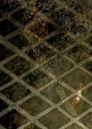 X-23 Target X Vol 1 5 Textless.jpg