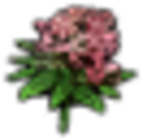 Flowers Orchid.png