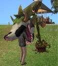 Laganaphyllis Simnovorii2.jpg