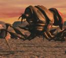 Blister Bug