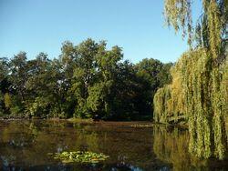 Park Skaryszewski Staw02