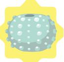 Blue-Sea-Urchin-Shell.png
