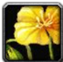 Inv misc flower 01.png