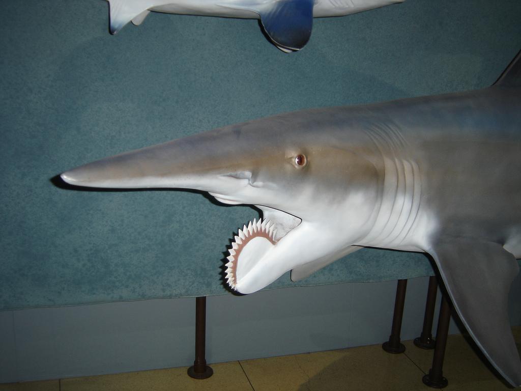 CC-BY files - Fossil Wiki, the paleontology wiki