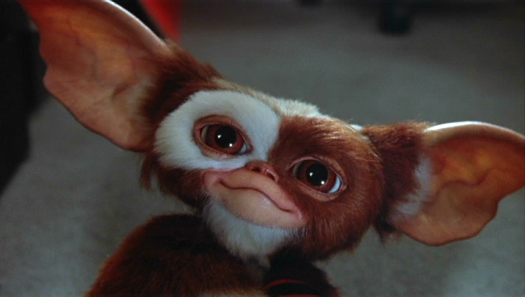 http://img2.wikia.nocookie.net/__cb20090920192843/gremlins/images/f/fa/Gizmo.PNG