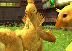 Chocobo family