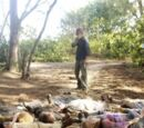 Ajira massacre