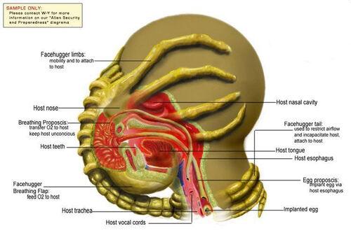 wiring diagram for polaris predator 90 movie predator diagram #11