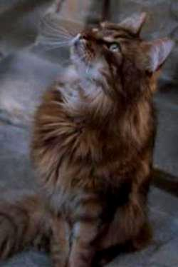 Name Of Filch S Cat