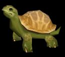 Черепаха в коробочке