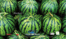 640melon.jpg