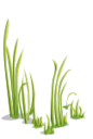 Grass2-icon.png