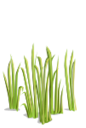 Grass5-icon.png