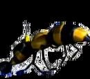 Wasp camera