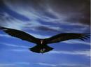 1985-Crow.png