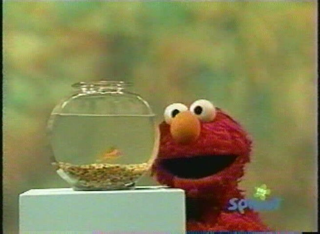 Elmo asks Dorothy what the letter of the day is.