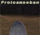 Protoamoeban