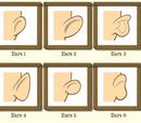 Ears Types