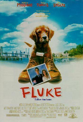 Dog Reincarnation Movie