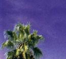 Una chihuahua de Beverly Hills 2