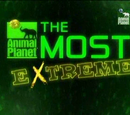 Animal Planet al extremo