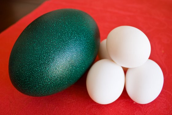 Emu Egg Recipes Wiki Wikia