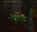 Fugu Plant