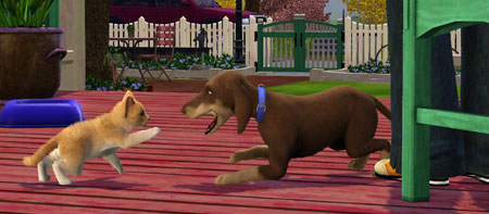 Sims  Cat And Dog Fight