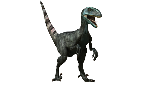 North America  It has appeared in 3 episodes of Jurassic Fight ClubJurassic Fight Club Dromaeosaurus
