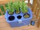 Hydroponic Stevia Garden.jpg