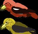 All Birds: Featured bird archives