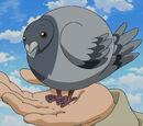 Carrier Balloon Pigeon