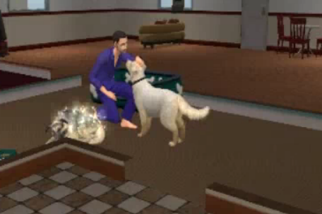How Do Dogs Give Birth Sims  Cats And Dogs
