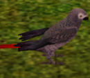 Images of The Sims 3 pets