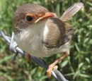 BirdClan