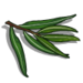 Eucalyptus Leaf-icon