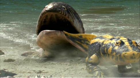 Hyneria wiki dino - Dinosaure marin carnivore ...