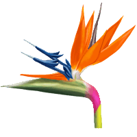 fichier fleur oiseau wiki equideow fr. Black Bedroom Furniture Sets. Home Design Ideas