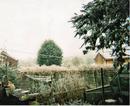 Banbury, Nov 29 snow .png