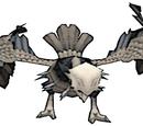 Dark vulture