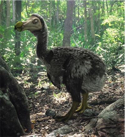 DodoDodo Bird Sightings