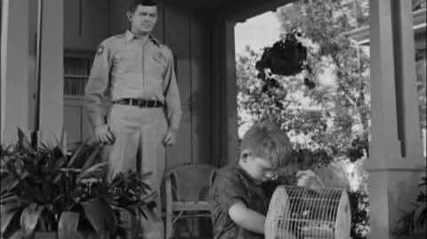 The Andy Griffith Show (S4E01) - Opie the Birdman(3 3)
