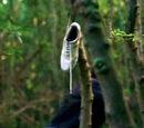 White tennis shoe