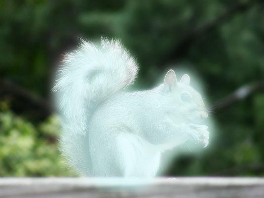Your Patronus(es) Gray_squirrel_patronus