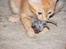 Why Do Cats Eat Litter
