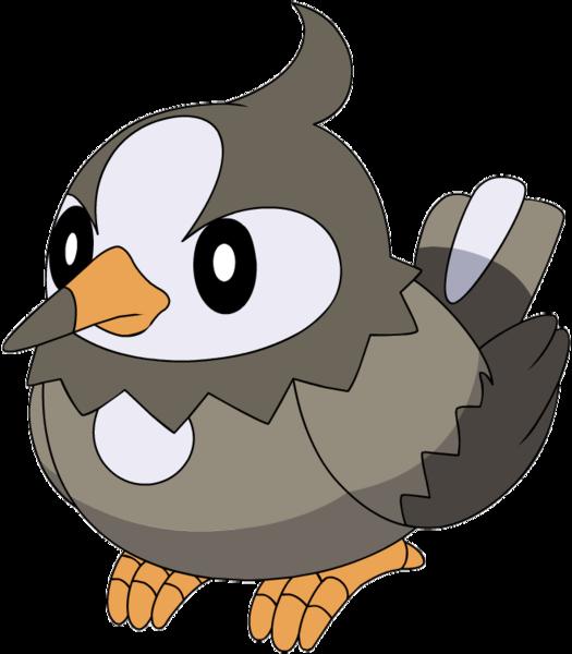 Starly Pokemon Evolves Images | Pokemon Images